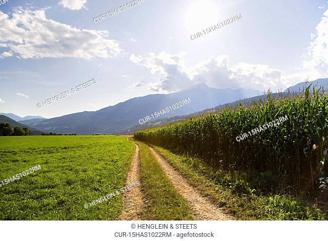 path along corn field on farm