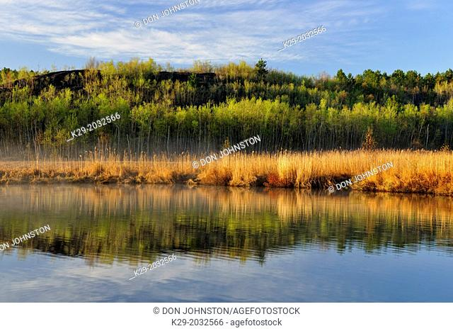 Spring aspens and reedbeds reflected in Robinson Lake, Greater Sudbury, Ontario, Canada