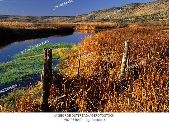 Wetland near Knox Pond, Malheur National Wildlife Refuge, Oregon