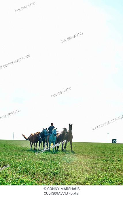 Man riding and leading six horses in field