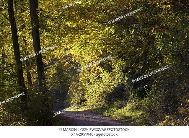 The Forest Road in Autumn, Munich, Germany