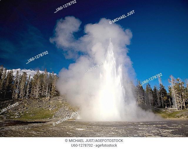 Grand Geyser erupts at The Upper Geyser Basin at Old Faithful at Yellowstone National Park, Wyoming