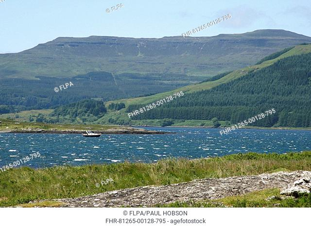 View of sea inlet, forestry and hills, Isle of Mull, Inner Hebrides, Scotland