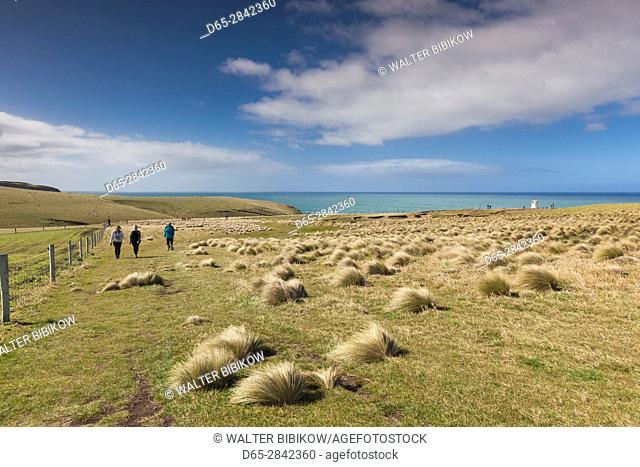 New Zealand, South Island, Southland, The Catlins, Slope Point, Southern-most point of the South Island of NZ, tussock landscape