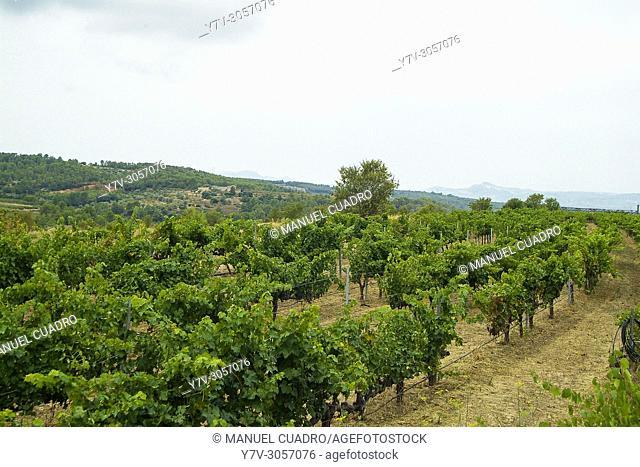 Bodega Mas de la Caçadora, integrada en Montsant, que es una denominación de origen establecida en 2002 e integrada por los municipios y bodegas que