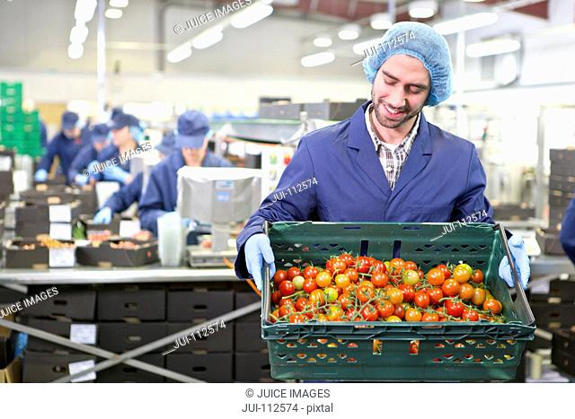 Worker holding crate of ripe red vine tomatoes in food processing plant