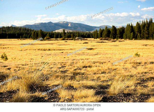 View of pristine landscape in Tolumne Meadows. Yosemite National Park, CA, USA