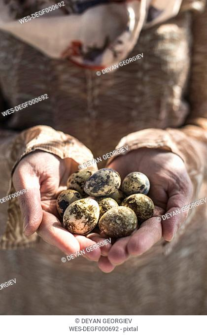 Woman's hands holding quail eggs, close-up