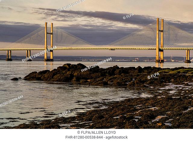 View of road bridge over river at sunrise, viewed from Black Rock near Portskewett, Second Severn Crossing, River Severn, Severn Estuary, Monmouthshire, Wales