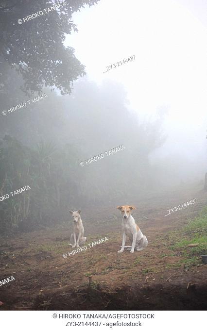 Two dogs, Agua Escondida, Solola, Guatemala