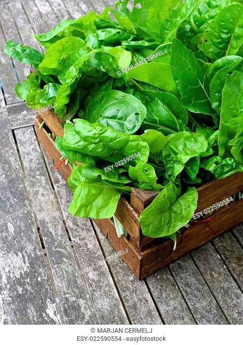 A Crate Of Organic Grown Rainbow Chard
