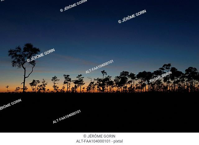 Trees backlit at twilight, Everglades National Park, Florida, USA