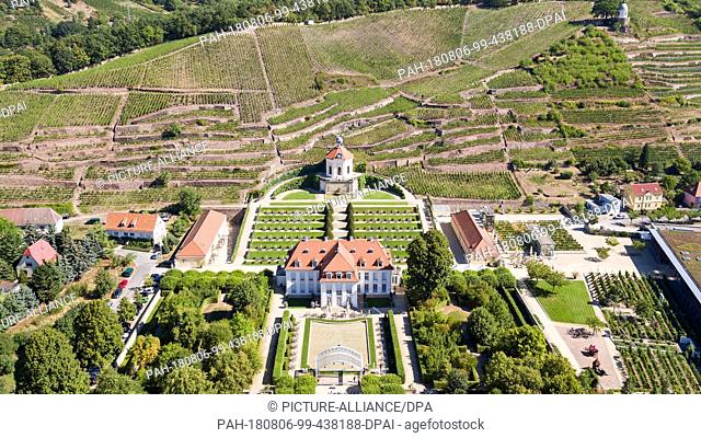 06 August 2018, Germany, Radebeul: View of the vineyards and the baroque garden of Wackerbarth Castle. The State Winery is both an adventure winery and a...