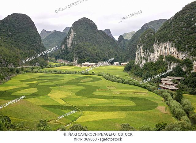 Rice Fields, Matou, Guizhou, China