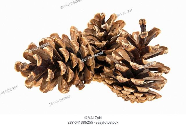 cones isolated on white background closeup