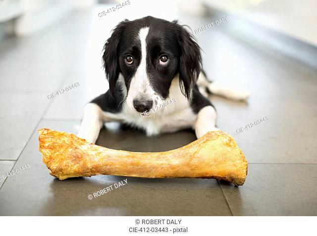 Dog eating bone on floor