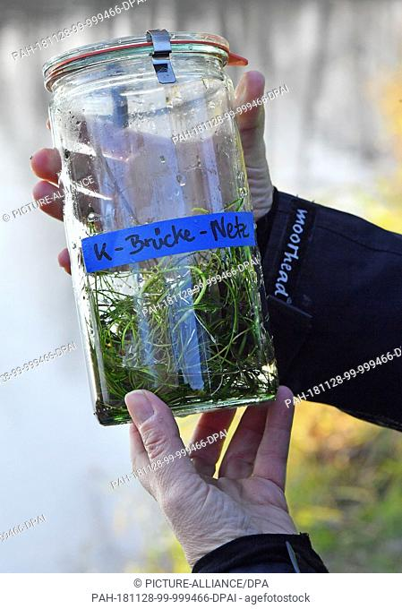 28 November 2018, Thuringia, Jena: A water sample from the Saale near Jena is in a jar. It is the first water sample on microplastic in Thuringia