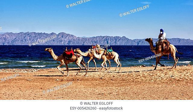 hoo hopp auch Kamele können schnell sein