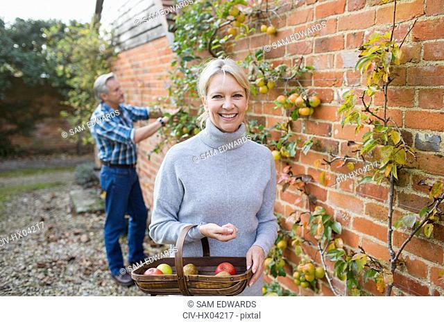 Portrait smiling, confident mature woman harvesting apples in garden