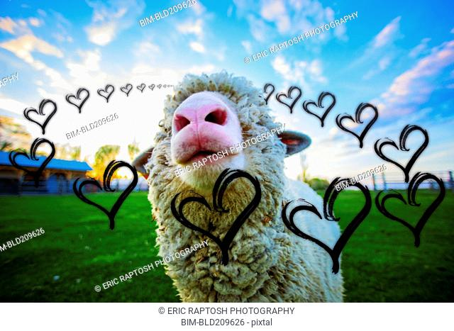 Illustrated hearts around sheep in field