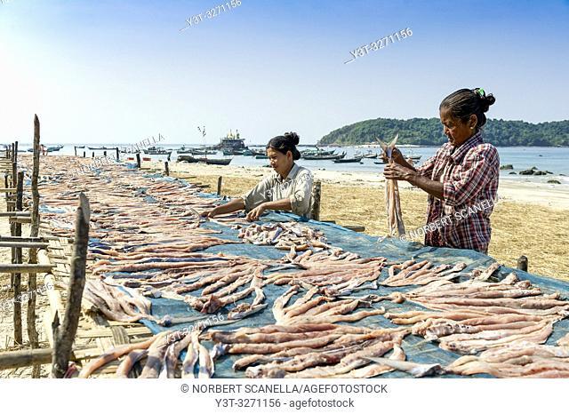 Myanmar (ex Birmanie). Ngapali. Arakan state. Bengal Golf Course. Fisherman village. Women working at drying fish