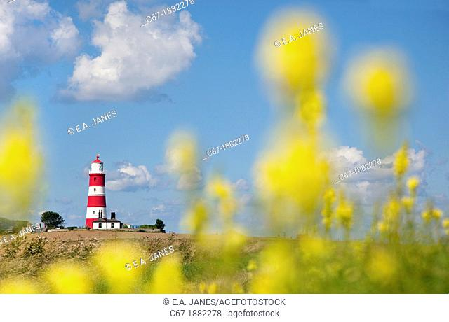Light House & Toadflax flowers Happisburgh Norfolk UK September