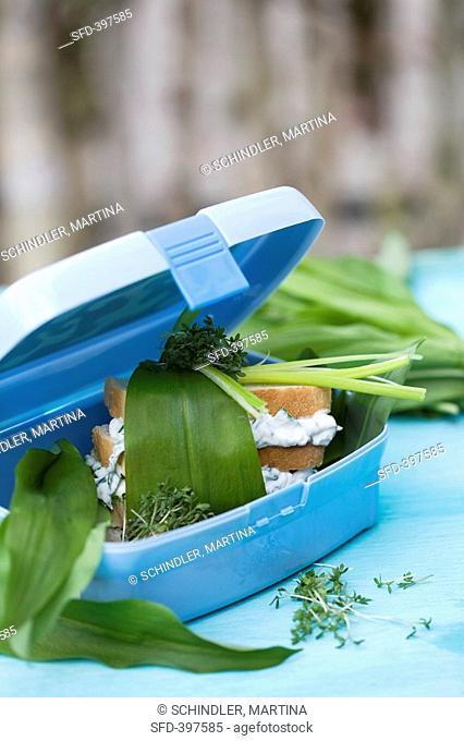Soft cheese sandwich with ramsons wild garlic in sandwich box