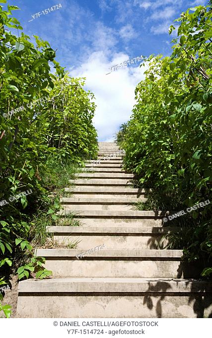 View of stairs between plants