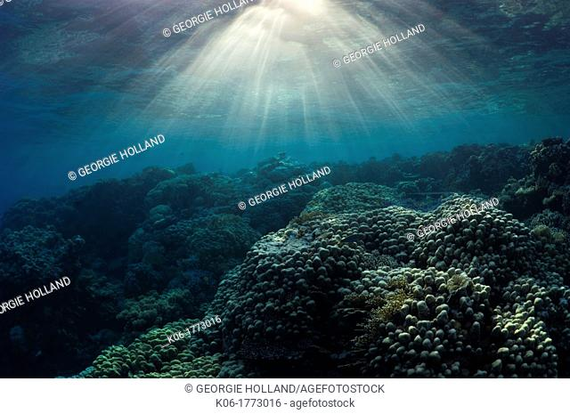 Coral reef with shafts of sunlight  Egypt, Red Sea
