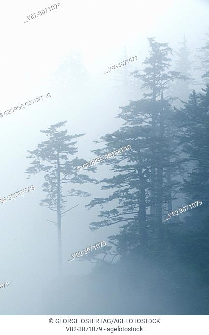 Forest edge through fog, Cape Meares State Park, Oregon