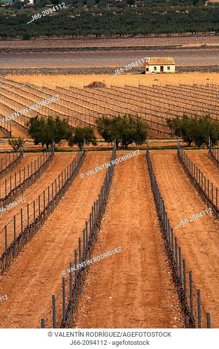 vineyard landscape in Villena, region Vinalopo. Alicante