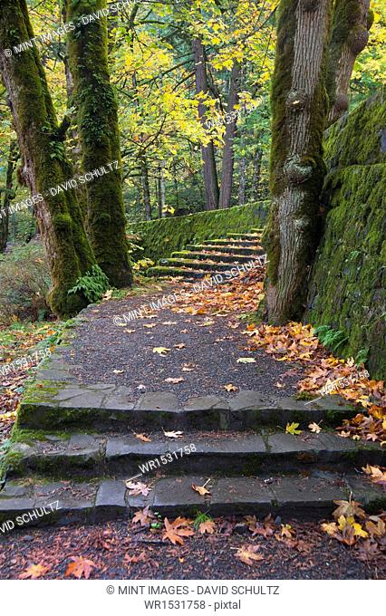 A path and steps through the woodland in the Columbia River Gorge