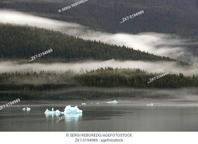 Icebergs near the Dawes Glacier, Endicott Arm, Tongass National Forest, Alaska, USA. Cliff-walled fjords sliced into the mountainous mainland are on tap today...