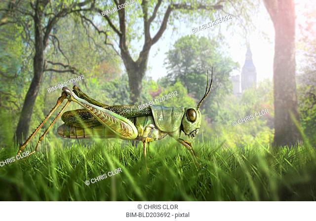 Illustration of cricket in grass
