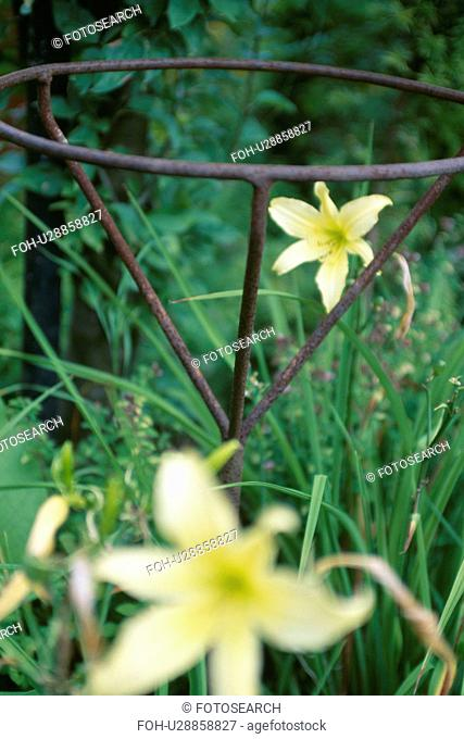 Close-up of yellow lilies with metal support frame