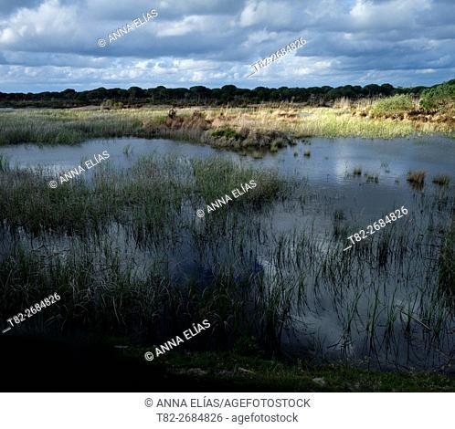 Lagoon Nature Park Doñana, Huelva, Andalusia, Spain