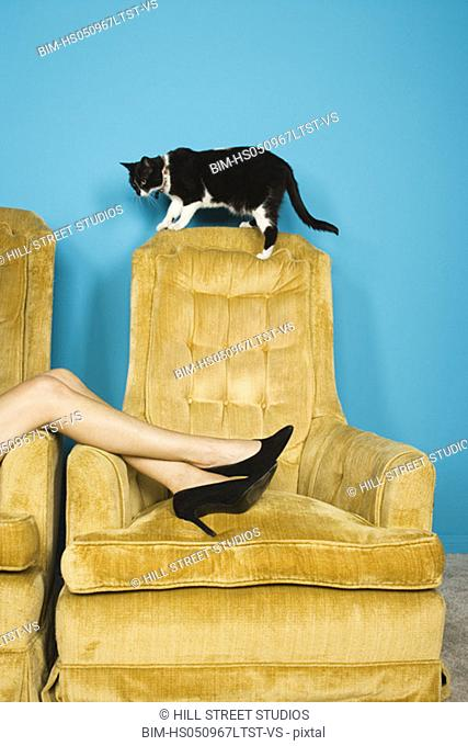 Woman's legs in chair with cat
