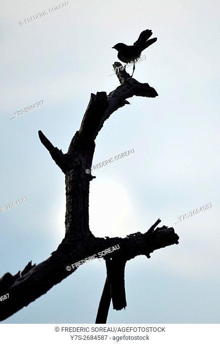 Silhouette of bird in Raja Empat islands, West Papua, Indonesia
