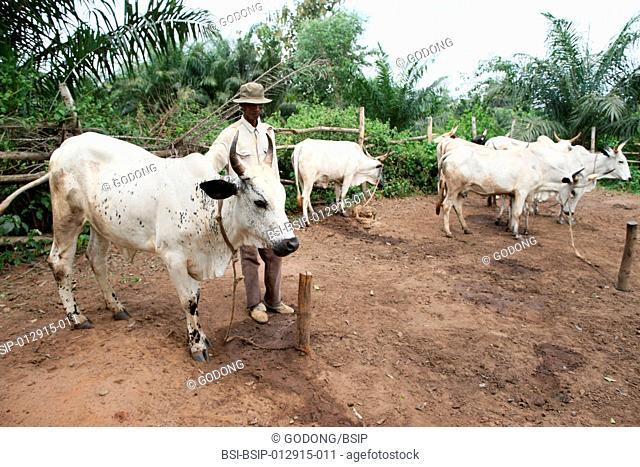 AN AFRICAN SCENE