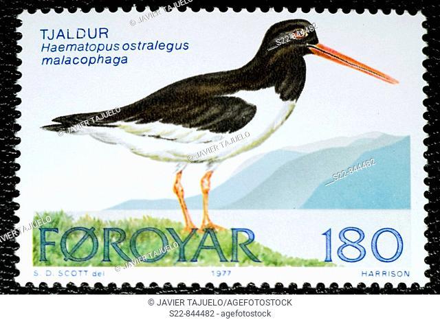 Eurasian Oystercatcher (Haematopus ostralegus), stamp, Faroe Islands