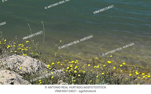 Flowers and water in a swamp. Almansa. Albacete. Spain