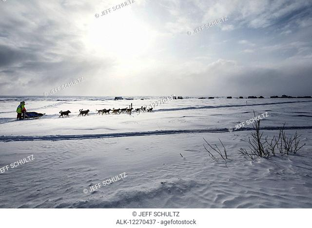 Monica Zappa on the trail just a few miles from the finish line along the Bering Sea coast passes summer fish shacks as she nears Nome during the 2014 Iditarod...
