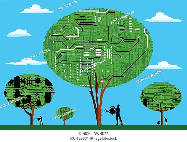Men looking after information technology trees