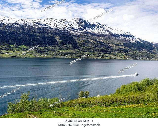 Local cruise ship, view of snow-covered mountains, fjord and apple trees in bloom, spring, Hardangerfjord near Lofthus, Hardanger, Norway, Scandinavia, Europe