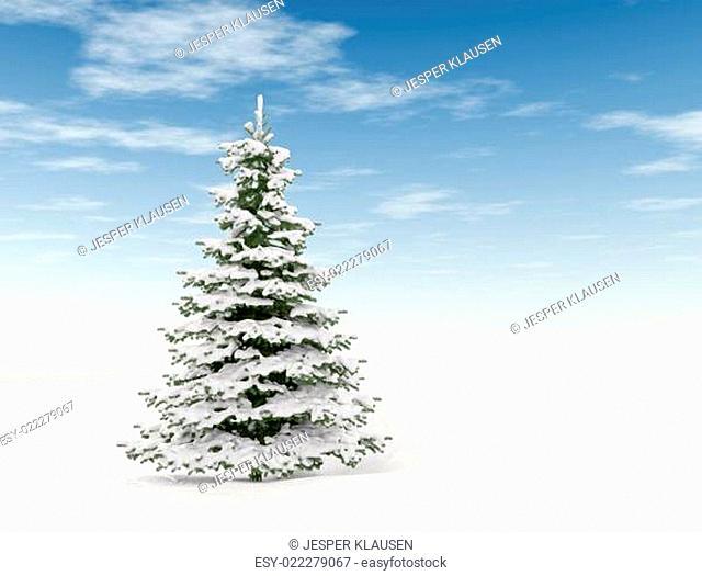 Single pine tree and snow