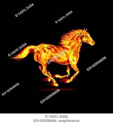 Fair-Horse-Run2