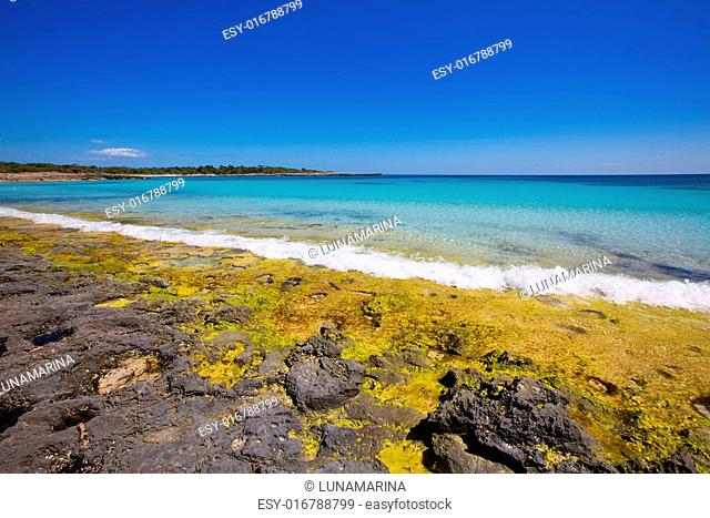 Menorca Son Saura beach in Ciutadella turquoise color at Balearic islands