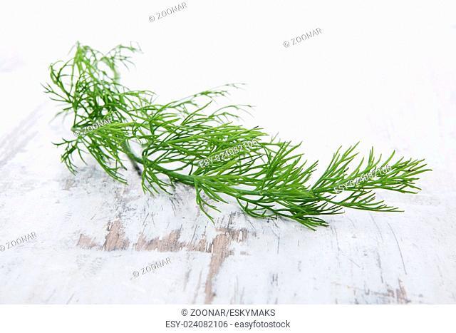 Culinary herbs. Dill