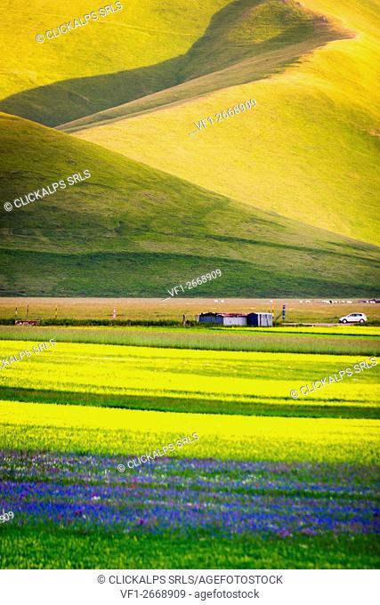 Castelluccio di Norcia, Umbria, Italy. Piana Grande Valley landscape full of flowers with Monte Vettore in background