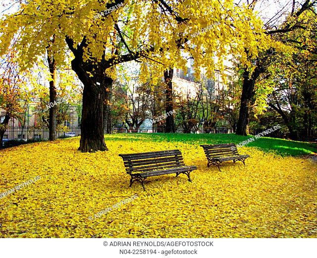 Golden autumn leaves at the Public Gardens, Modena, Emilia-Romagna